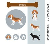 beagle dog breed infographic ... | Shutterstock .eps vector #1049160425