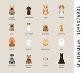 dog breeds set  small and... | Shutterstock .eps vector #1049176931