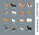 dog breeds set  small and...   Shutterstock .eps vector #1049176934