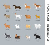 dog breeds set  small and... | Shutterstock .eps vector #1049176937