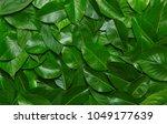 creative layout made of green... | Shutterstock . vector #1049177639