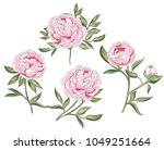 stock photo of tender pink... | Shutterstock .eps vector #1049251664