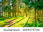 spring forest pathway sunlight... | Shutterstock . vector #1049275754