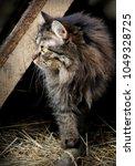 photo of rough cat portrait... | Shutterstock . vector #1049328725