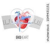 ekg readings on paper and human ... | Shutterstock .eps vector #1049431151