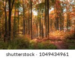 magical autumn light | Shutterstock . vector #1049434961