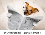 Stock photo cool funny jack russell dog reading a newspaper or magazine wearing reading glasses 1049459054