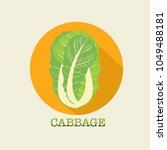 cabbage. chinese cabbage.... | Shutterstock .eps vector #1049488181
