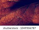 autumn leaf macro   leaf... | Shutterstock . vector #1049506787