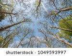 trees in a forest looking up to ... | Shutterstock . vector #1049593997