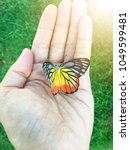 beautiful color butterfly on...   Shutterstock . vector #1049599481
