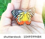 beautiful color butterfly on...   Shutterstock . vector #1049599484