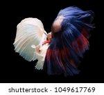fighting fish prepare to fight | Shutterstock . vector #1049617769