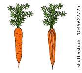 fresh orange carrots with... | Shutterstock .eps vector #1049622725