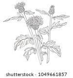 illustration contour of wild... | Shutterstock . vector #1049661857