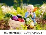 cute little boy holding a bunch ... | Shutterstock . vector #1049734025