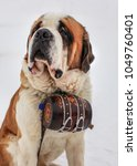 Small photo of St. Bernard rescue dog with iconic barrel.