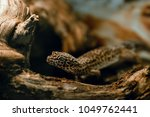 reptile in a wild world | Shutterstock . vector #1049762441