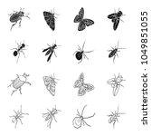 an insect arthropod  an osa  a...   Shutterstock .eps vector #1049851055