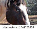blue eyed spotted saddle horse | Shutterstock . vector #1049905154