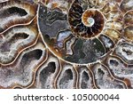Detail Of A Fossilized Ammonit...