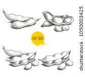 hand drawn sketch style edamame ... | Shutterstock .eps vector #1050003425