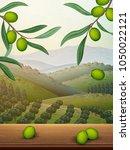 natural orchard scene  olive... | Shutterstock .eps vector #1050022121