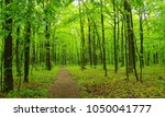 beautiful green forest in spring | Shutterstock . vector #1050041777