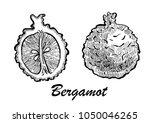 hand drawn illustration of... | Shutterstock .eps vector #1050046265
