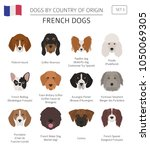 dogs by country of origin.... | Shutterstock .eps vector #1050069305