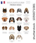 dogs by country of origin.... | Shutterstock .eps vector #1050071081