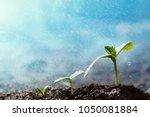 green seedling growing on the... | Shutterstock . vector #1050081884