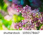 lilac flower background | Shutterstock . vector #1050178667
