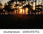 View Of Sunset Landscape Pine...