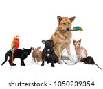 Stock photo group of pets isolated on white background 1050239354