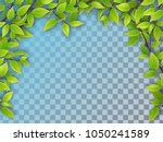 Realistic Vector Tree Branches...