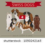 dogs by country of origin.... | Shutterstock .eps vector #1050242165