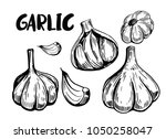 garlic. hand drawn illustration ... | Shutterstock .eps vector #1050258047