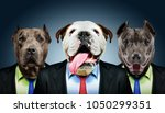 Stock photo portrait of three dogs in business suits 1050299351