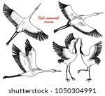 wild birds in flight. animals... | Shutterstock .eps vector #1050304991