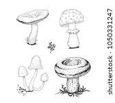 cep mushrooms vector sketch set ... | Shutterstock .eps vector #1050331247