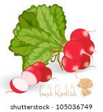 radish. vector. | Shutterstock .eps vector #105036749