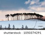 pines on the braes of abernethy ... | Shutterstock . vector #1050374291