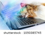 photo of collie dog lay down... | Shutterstock . vector #1050385745