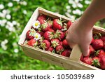 Woman Holding Basket With...