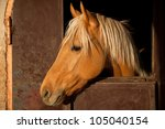 Brown Horse With Blond Hair In...