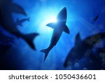 a school of sharks in the deep... | Shutterstock . vector #1050436601