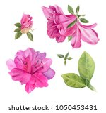 Bright Pink Azaleas. Watercolo...