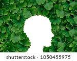 ginkgo biloba leaf human head... | Shutterstock . vector #1050455975