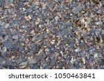 Small photo of Greyish brown wet fallen leaves from above